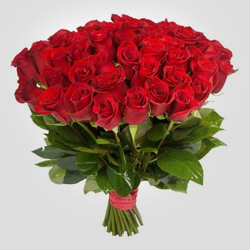 №11 акция 51 эквадорская  красная роза 80-90 см