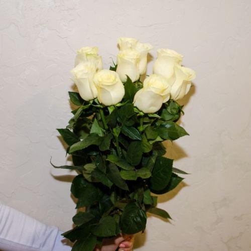 № 45 акция 9 белых высоких роз эквадор на ленте