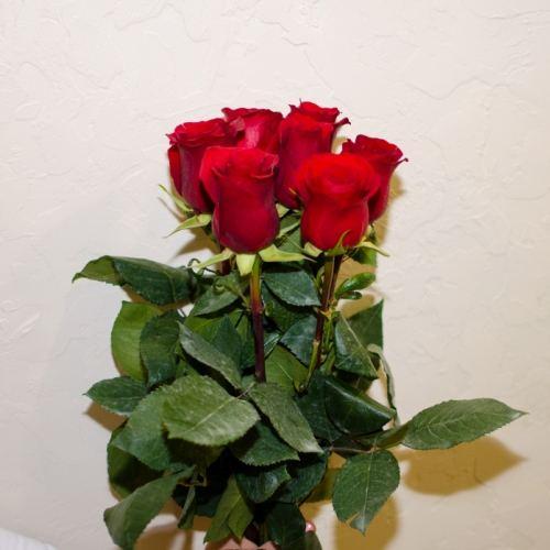 № 47 акция 7 красных высоких роз эквадор на ленте