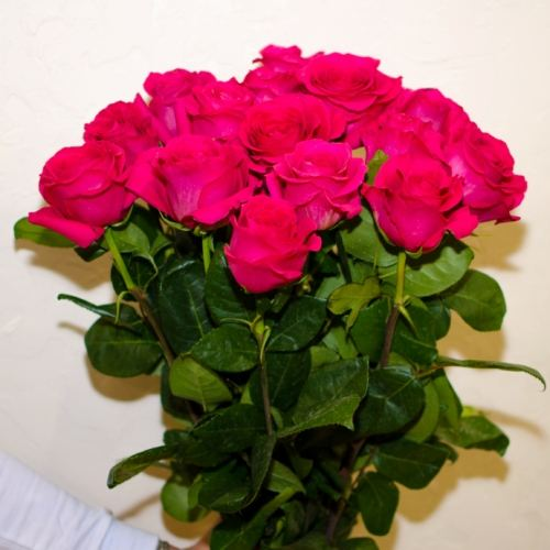 № 43 акция 15 розовых высоких роз эквадор на ленте