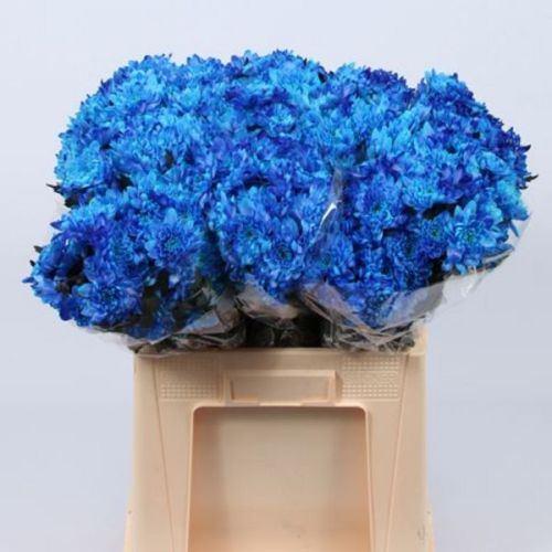 № 252 хризантема кустовая синяя