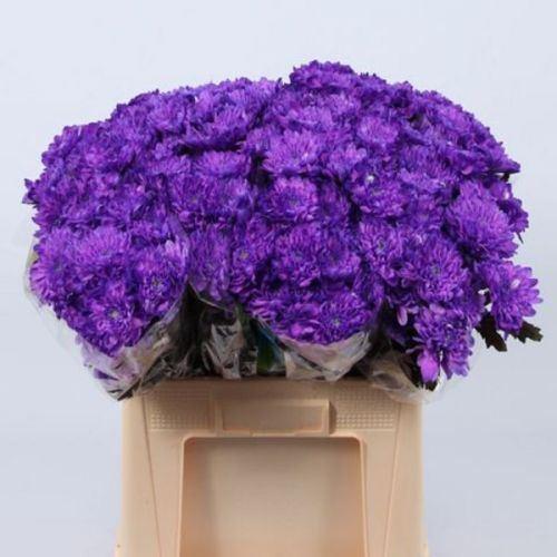 № 253 хризантема кустовая фиолетовая