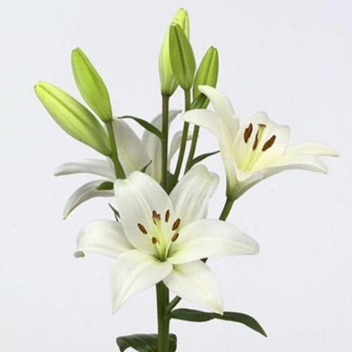 № 245 лилия белая