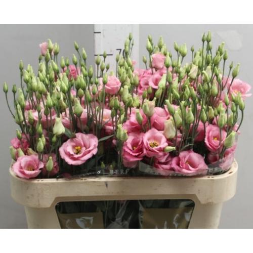 № 238 эустома розовая