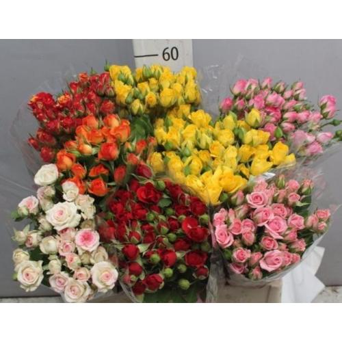 № 236 кустовая роза